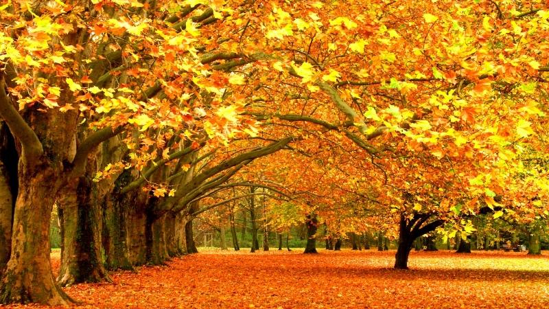 Осень поражает воображение богатством и яркостью красок