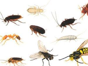 Разновидности насекомых в ванне