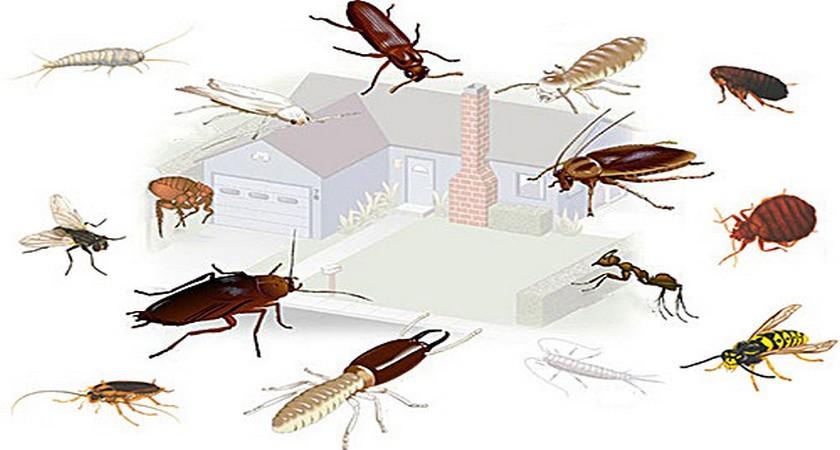 все виды домашних насекомых в картинках следите